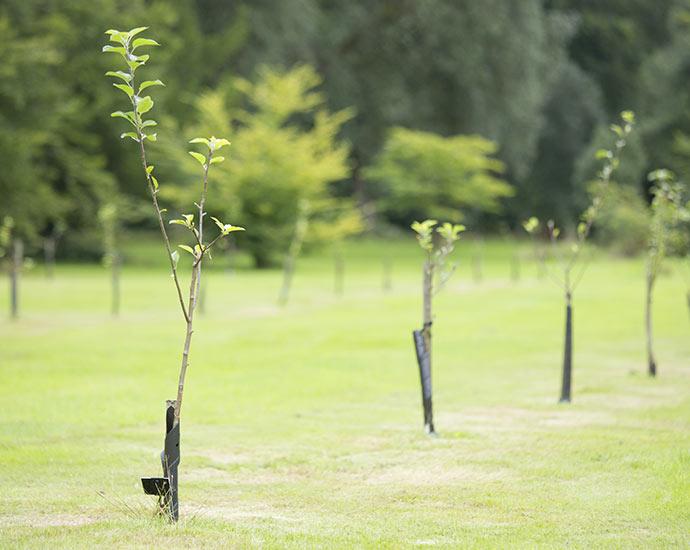 Nachhaltigkeit | Holz Pirner GmbH | Pommelsbrunn